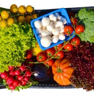 Gemüse LARGE